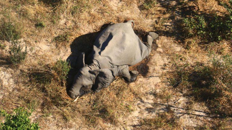 motivo de la muerte de los elefantes Bostwana
