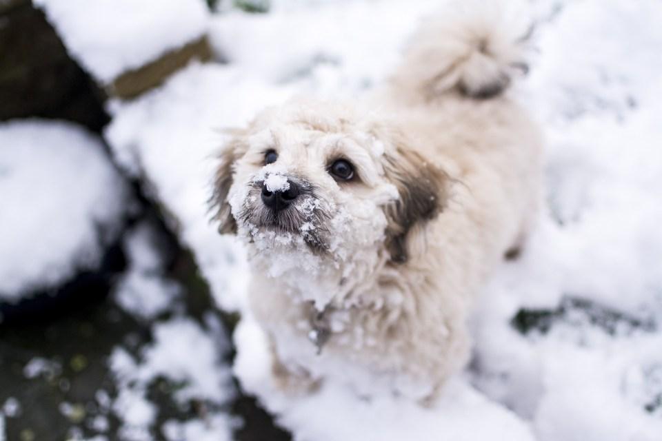 cortes de pelo en perros cuando llega el invierno
