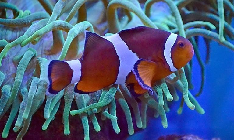 Te presentamos algunos de los peces más agresivos de agua salada