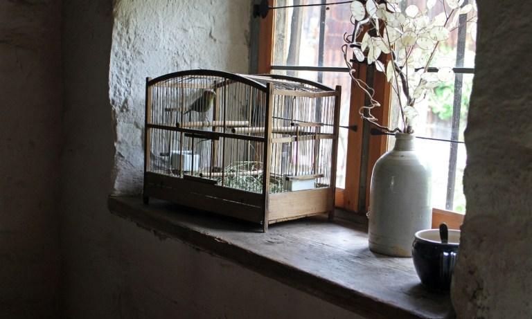 Dónde poner la jaula de un pájaro