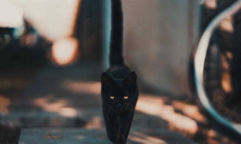 Descubre qué hacer con un gato abandonado