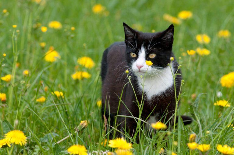 tratamientos para evitar garrapatas en gatos