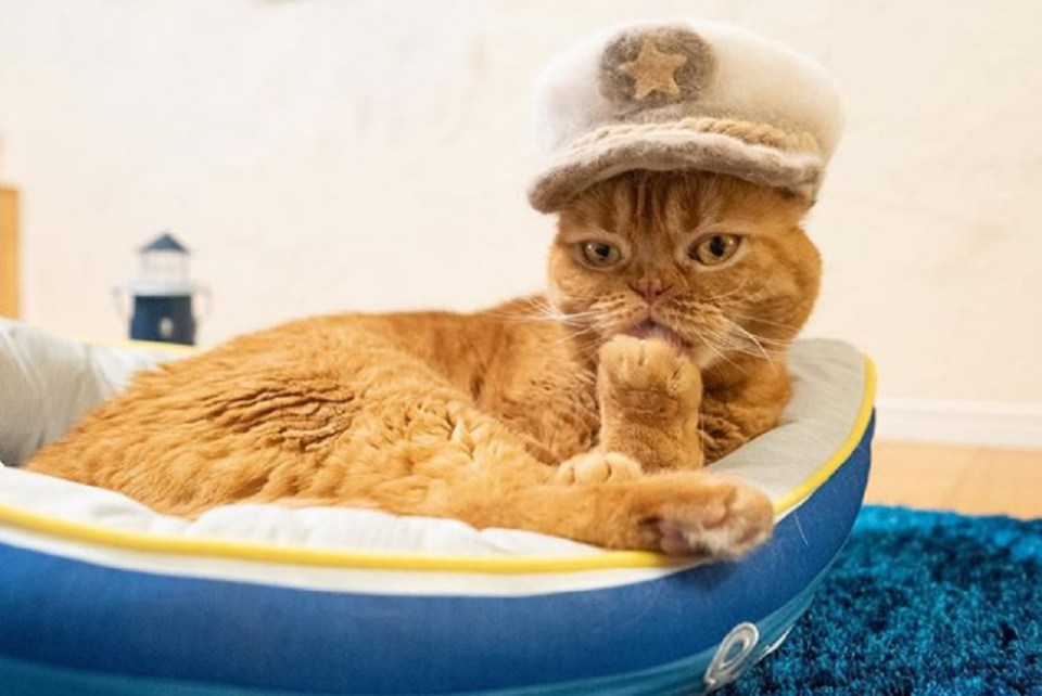 Los Sombreros hechos con pelo de gato nacieron en Japón, pero también los hay en Rusia