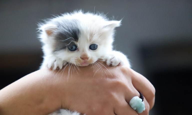 Esto es lo que necesitas saber antes de tener un gato en casa