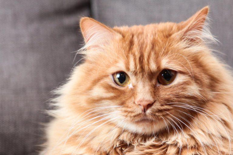 adoptar un gato en Valladolid