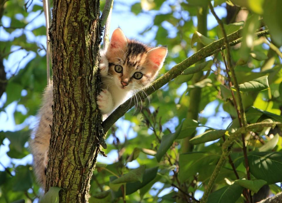 Cuando son gatitos, aprenden y memorizan muchas cosas