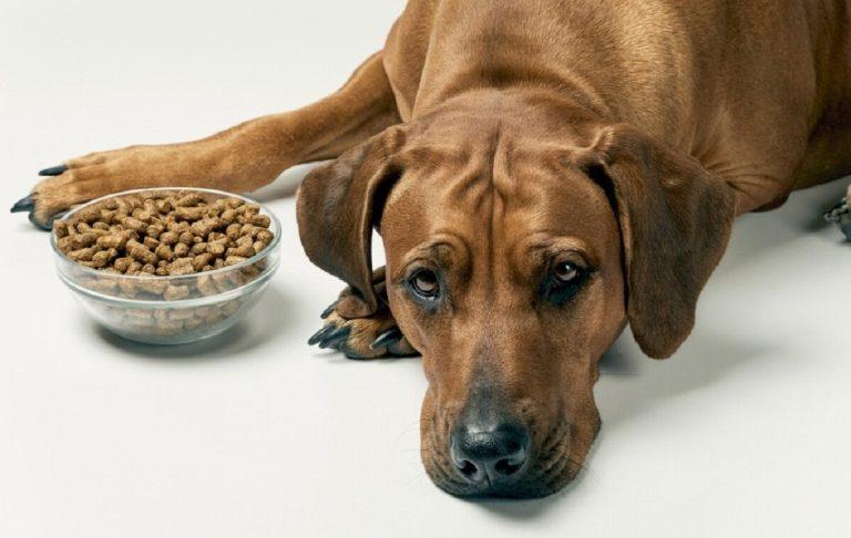 perro decide no comer