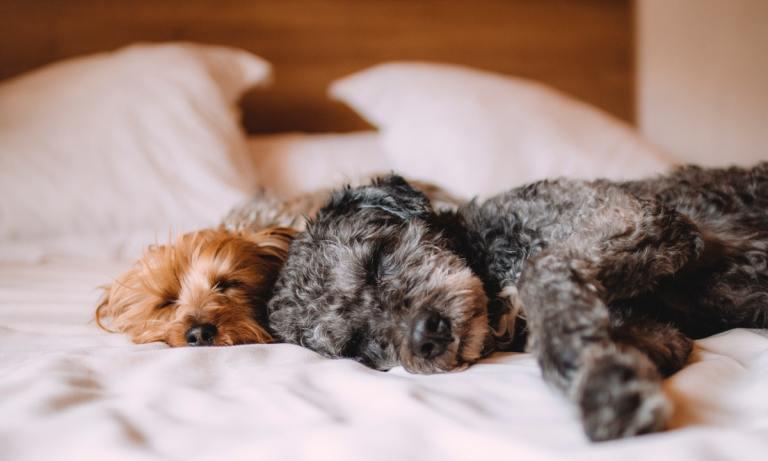 ¿Sabes qué sueñan los perros?