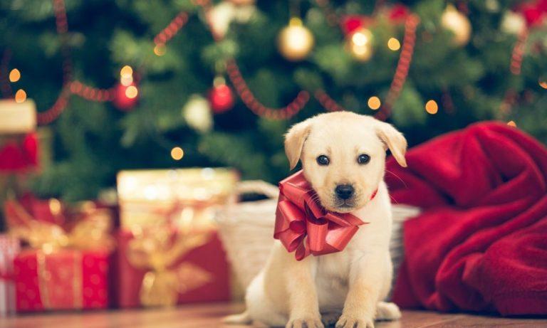 Regalar un perro en Navidad