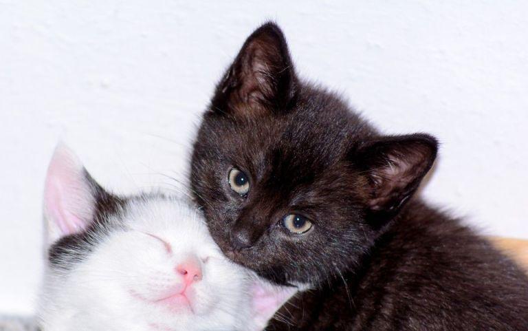 adoptar un gato en lugo