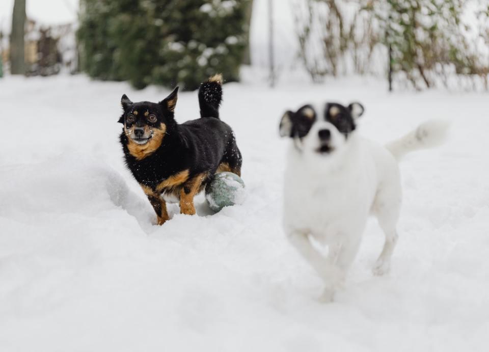 Las almohadillas de los perros son muy sensibles