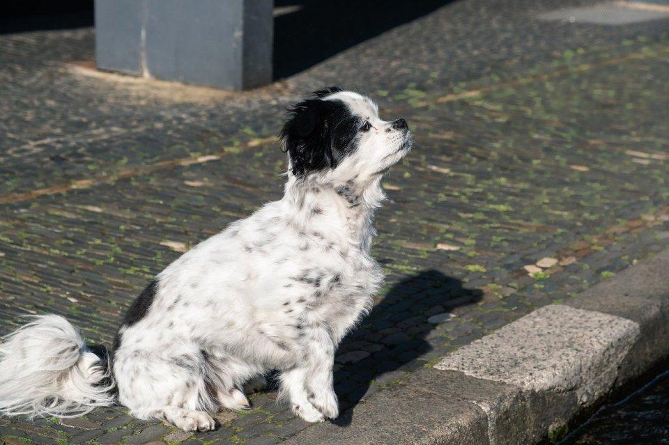 Adoptar un perro en Cuenca