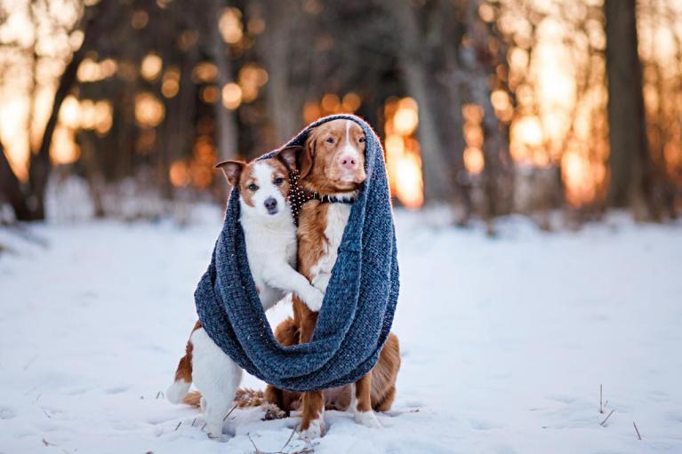 sacar un perro a la calle con frío extremo