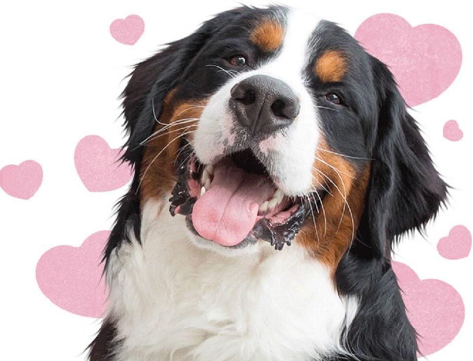 Discover Dogs es el día de perros más grande de Reino Unido
