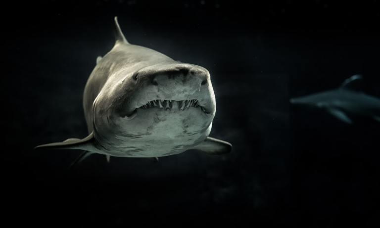 La importancia de los tiburones es un tema muy olvidado que deberíamos tener en cuenta