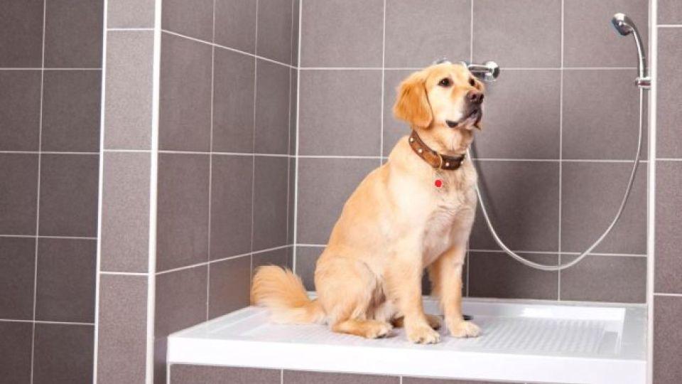 dónde bañar a mi perro