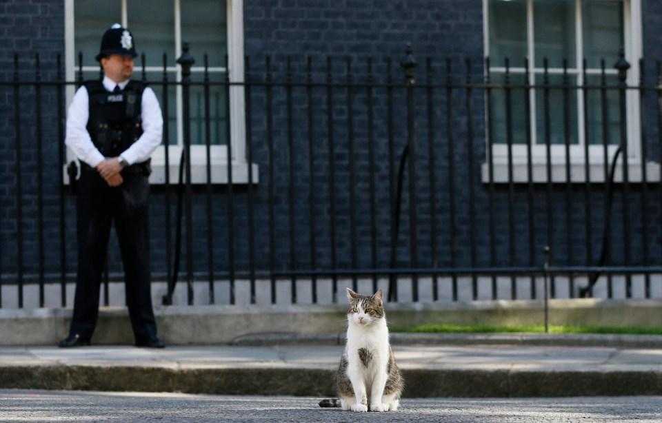 Es común encontrarse a Larry afuera de la residencia del Primer Ministro