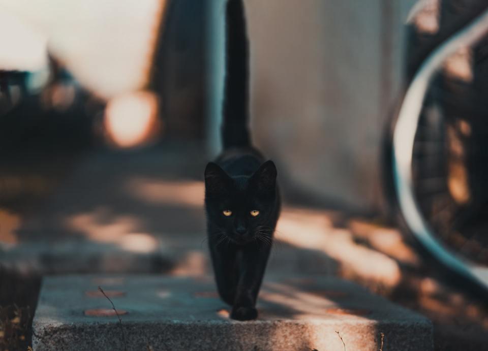 Tener un gato en casa trae buena suerte, especialmente si es de color negro