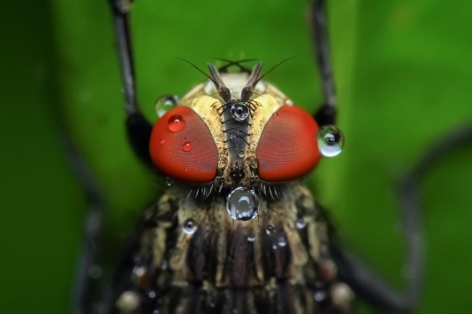 ¿Sabes cuánto vive una mosca? ¡28 días!