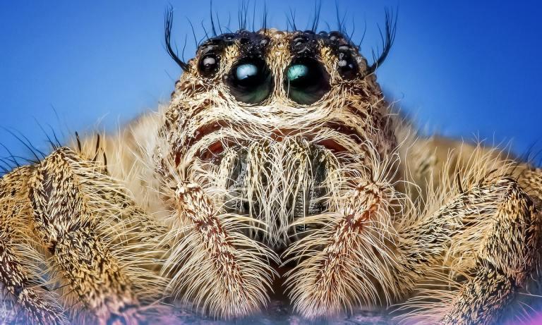 ¿Te has preguntado cuántos ojos tiene una araña? ¡4 pares por lo general!