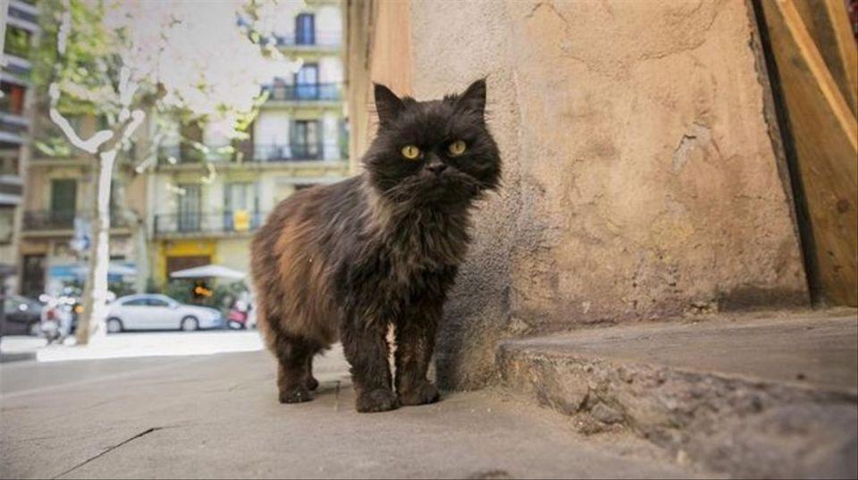 cómo adoptar un gato en barcelona