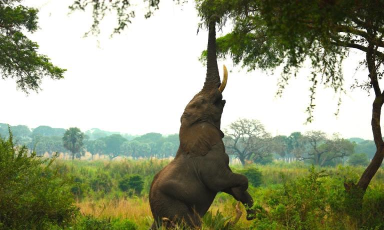 ¿Sabes qué comen los elefantes?