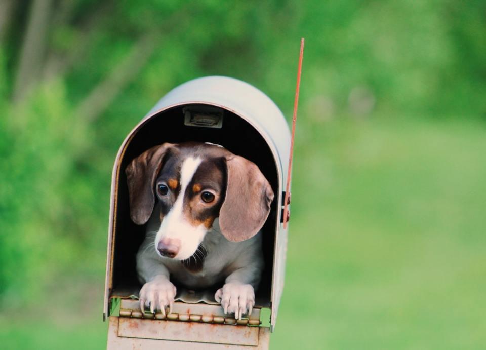 Algunos seguros cubren si la mascota se ha perdido