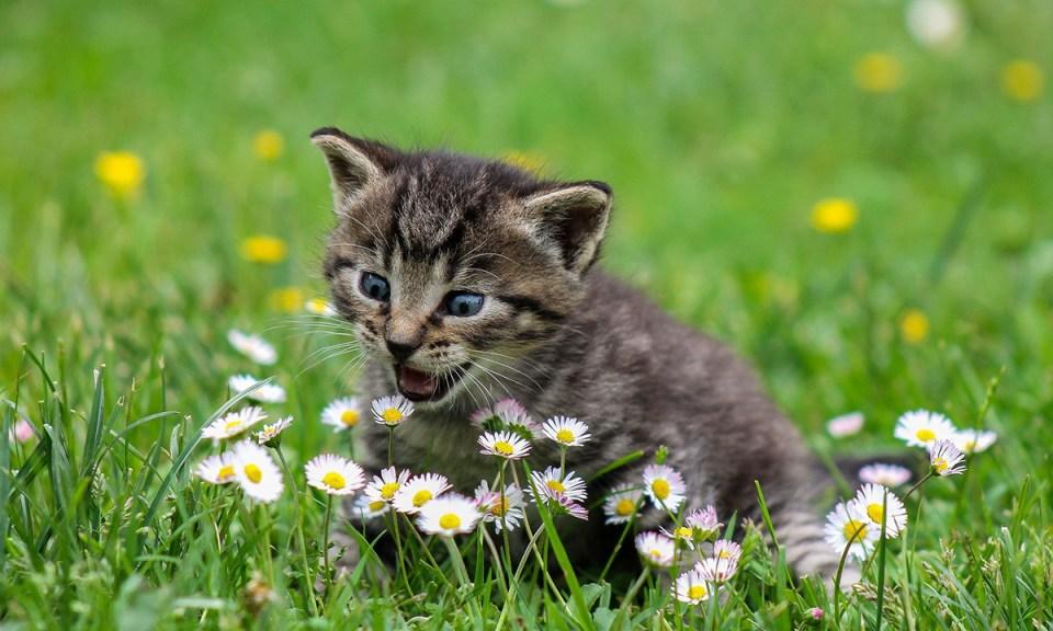 Plantas perjudiciales para los gatos