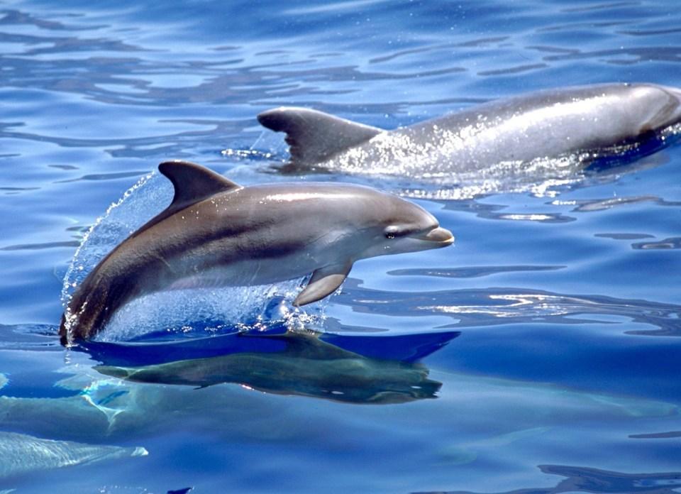 cómo comen los delfines