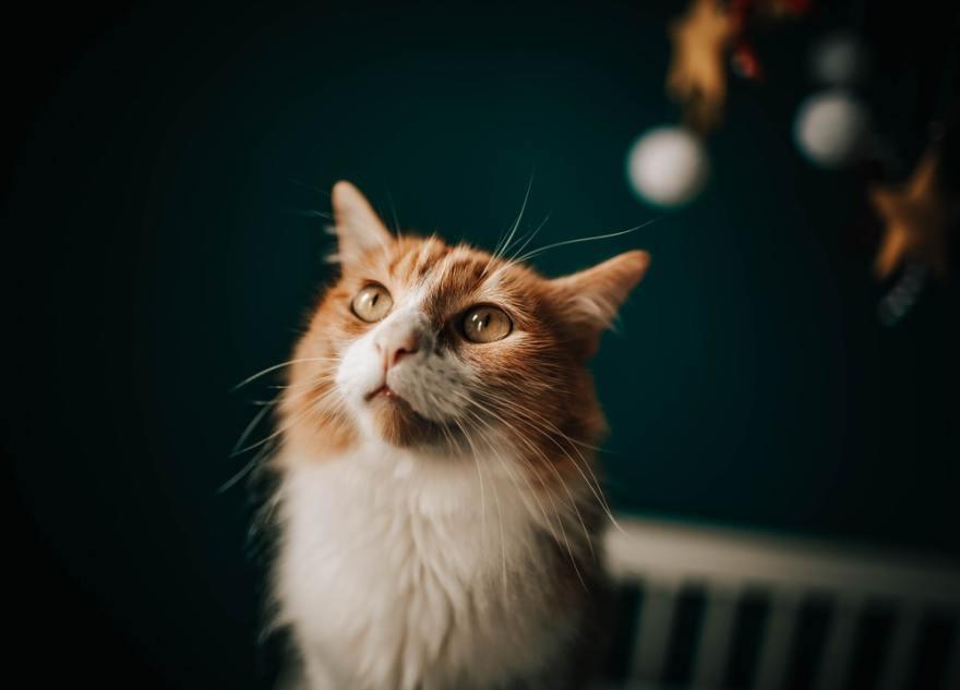 El pienso para gatos esterilizados reduce la obesidad