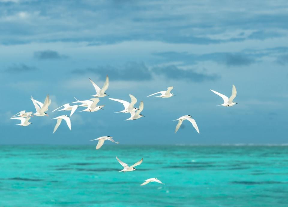 La Física es reponsable de cómo vuelan los pájaros