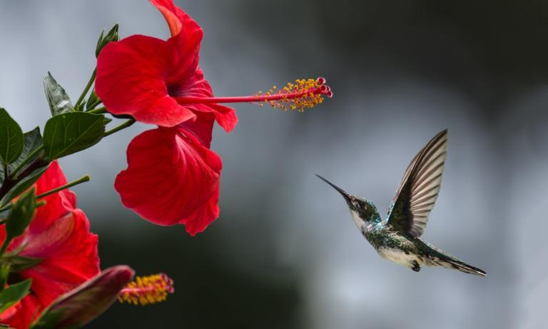cómo vuelan los pájaros descubrelo