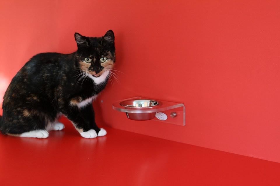 Un buen comedero automático gatos puede ser controlado a través de una app