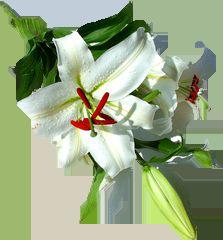 almaye-ingredient-fleur-de-lys