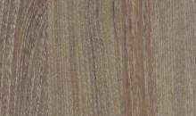 Golden Acacia B5KA18 (017)