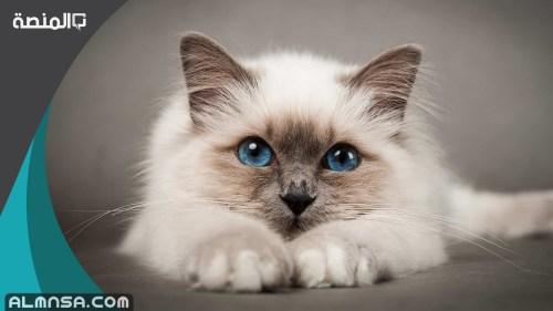 اسماء قطط اناث اجنبية 2021