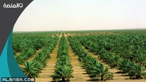 مواعيد زراعة المحاصيل في السعودية