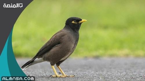 أنواع الطيور في المملكة العربية السعودية