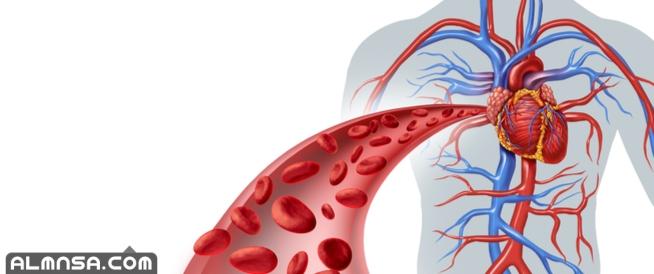 كم لتر من الدم في جسم الانسان