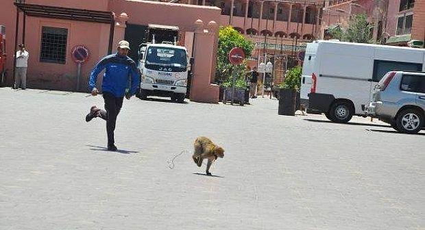 أمن مراكش يحقق في اعتداء على 3 سياح منهم سائحة شرملها قرد