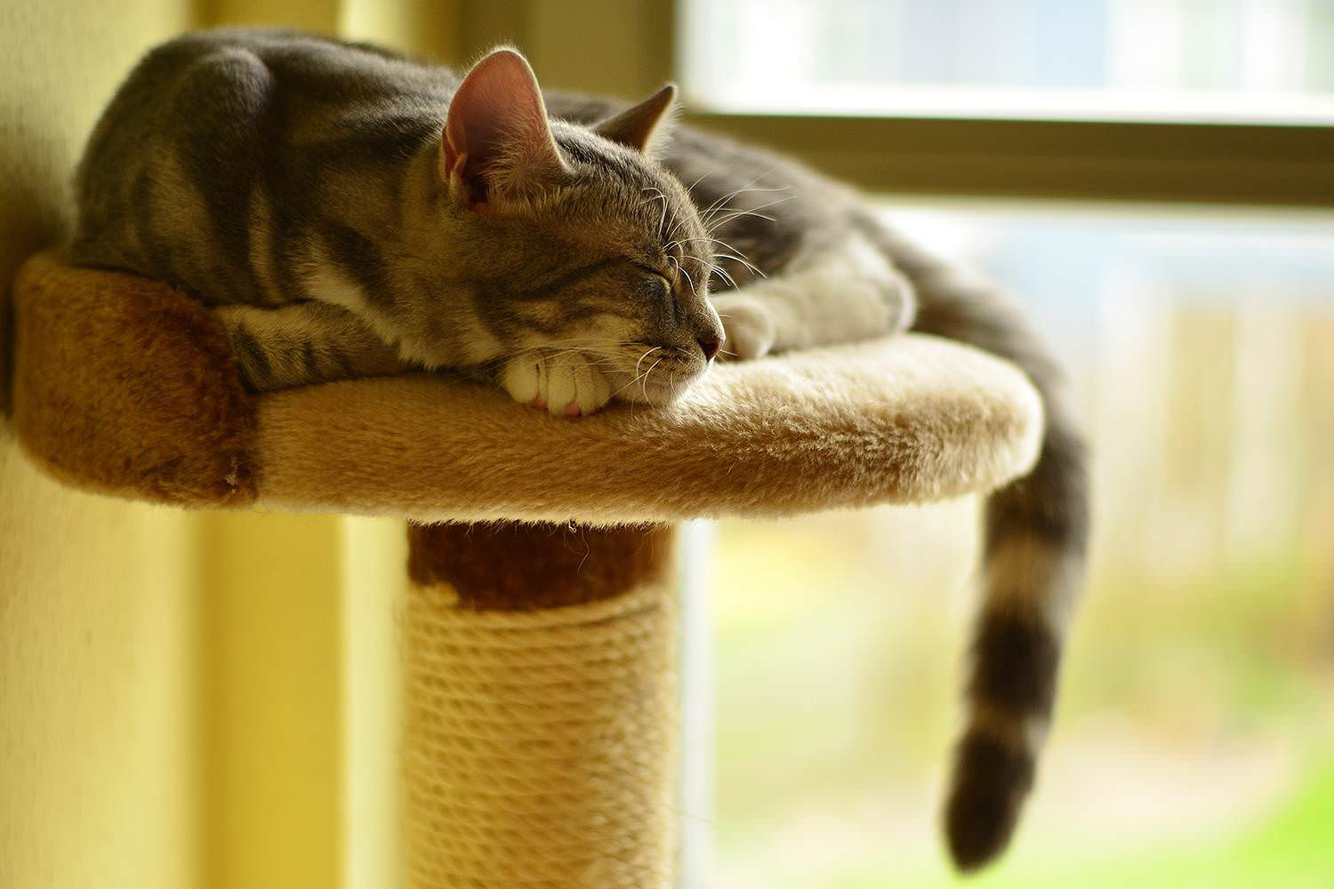 Cats scratching: how to avoid unpleasant surprises