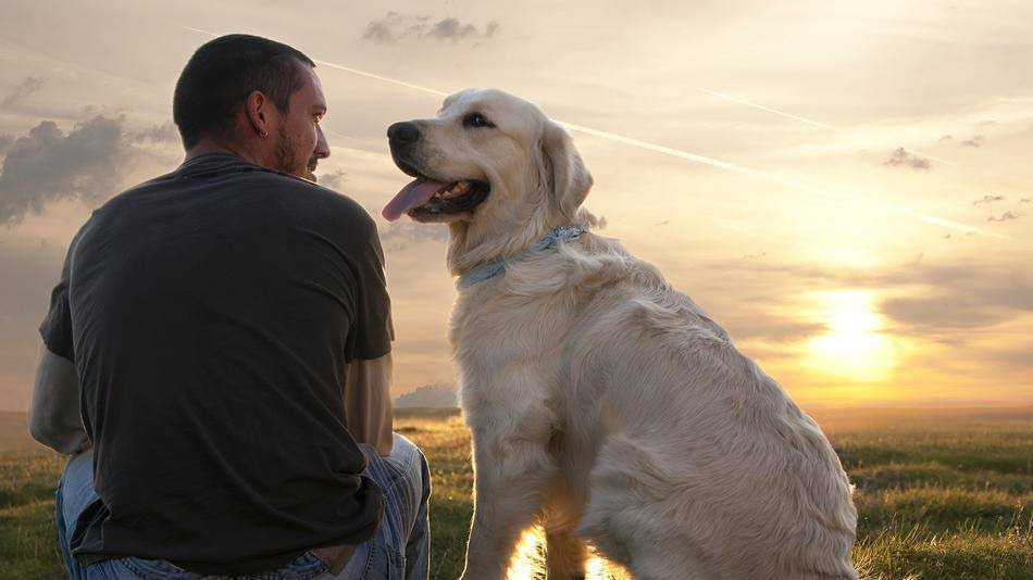 Dog-human chemistry: the role of oxytocin