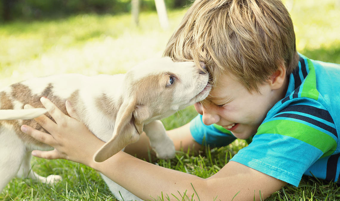 Growing up with a dog is healthy: the research