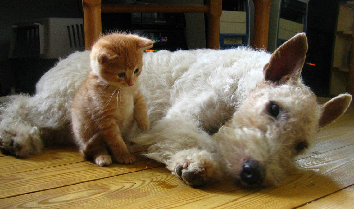 Dogs and cats are living longer: the study