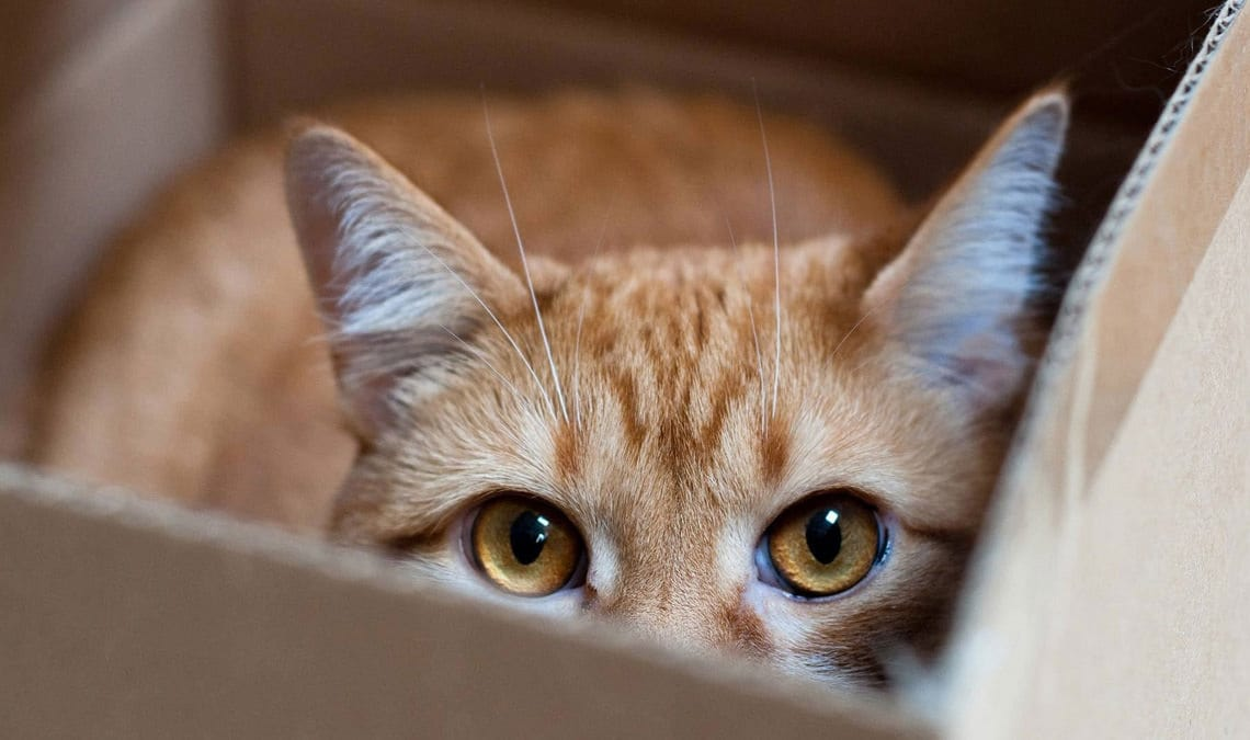 Cats and hiding places: play or stress?
