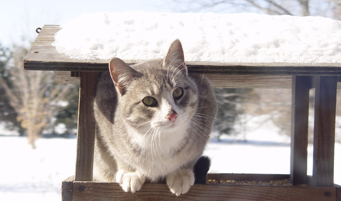 How to take care of cats in winter