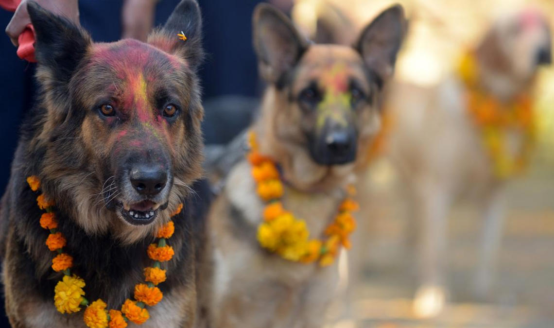 Kukur Tihar: the festival that honours dogs