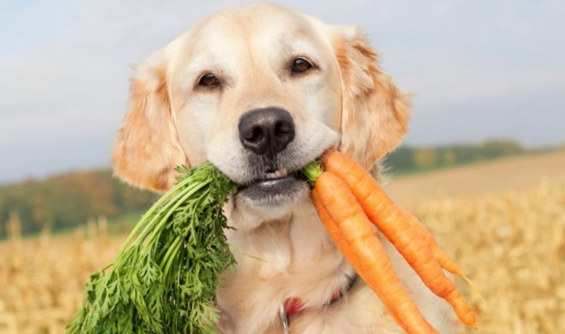 A vegetarian diet for cats and dogs? Let's respect their nature!