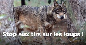 Passez à l'action : #SosLoups !