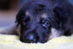 The importance of Lucy's law: what's next for companion animals?